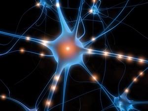 神経節に潜むヘルペスウイルス